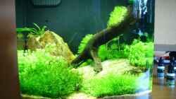 Glofish Aquarium Gravel, Black with Fluorescent