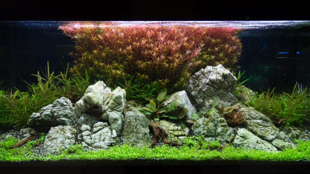 Aquascapes Deutsch : Example No 27886 from the category aquascaping