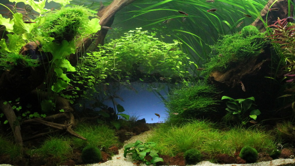 Aquascapes Deutsch : Example No 28658 from the category aquascaping