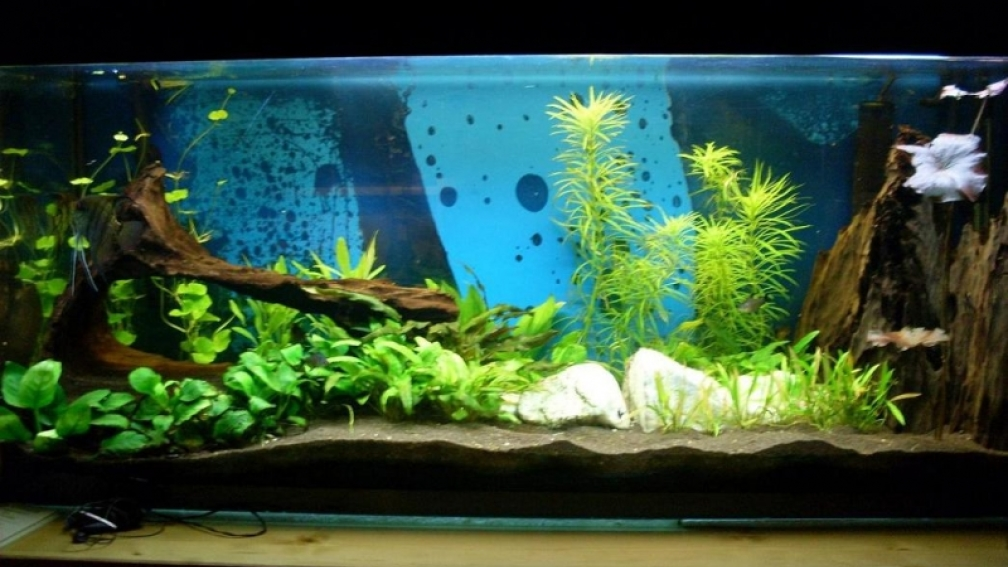 Example no 6541 from the category mixed america tanks for Aquarium 120x40x50