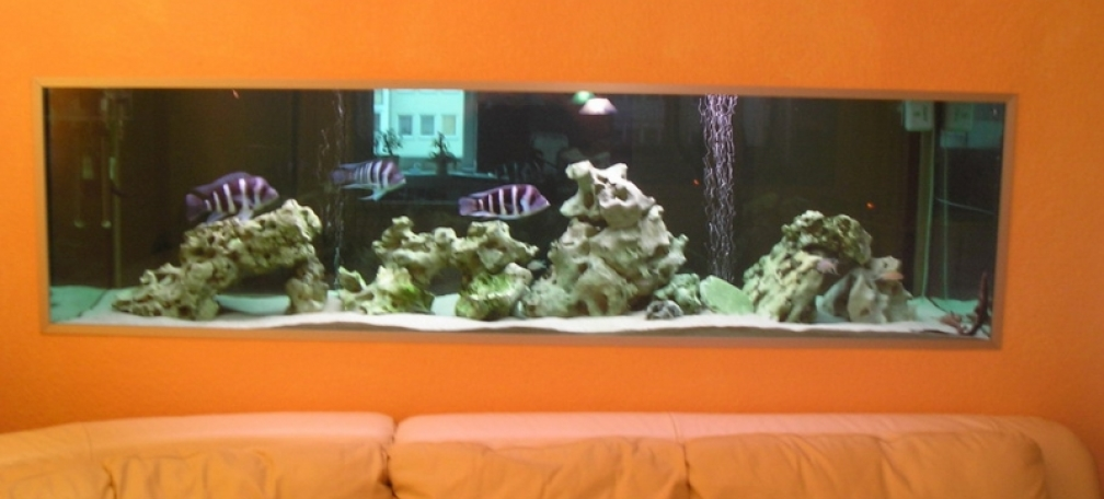 interessant aquarium wohnzimmer - example no 823 from the category lake tanganyika