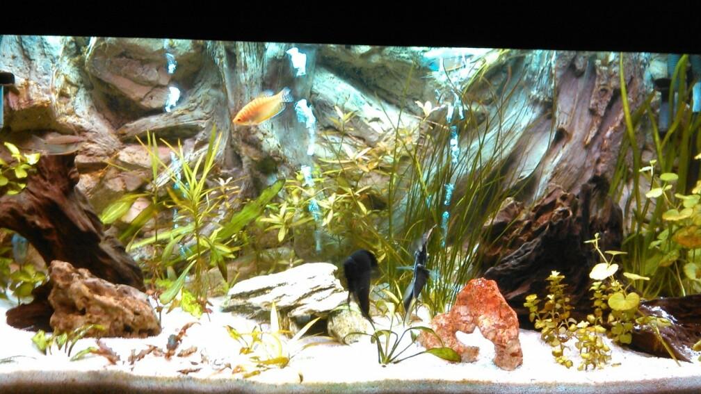 Exemple nombre 29478 de cat gorie communautaire for Terreau aquarium