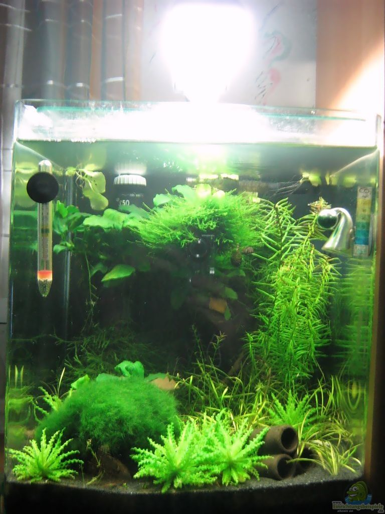 Example no 10039 from the category invertebrates for Aquarium nano cube