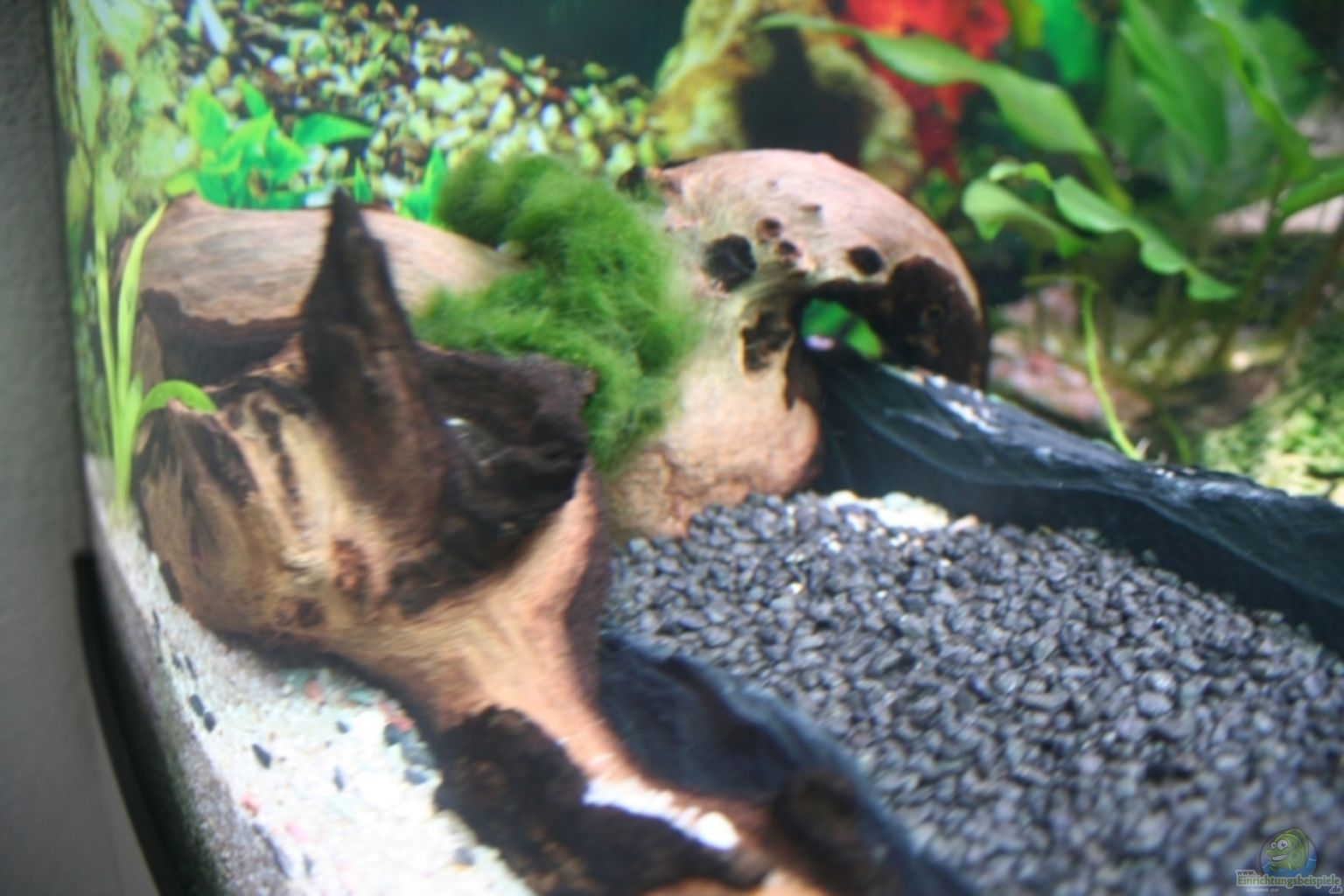Example no 11650 from the category community tanks for Aquarium wurzel