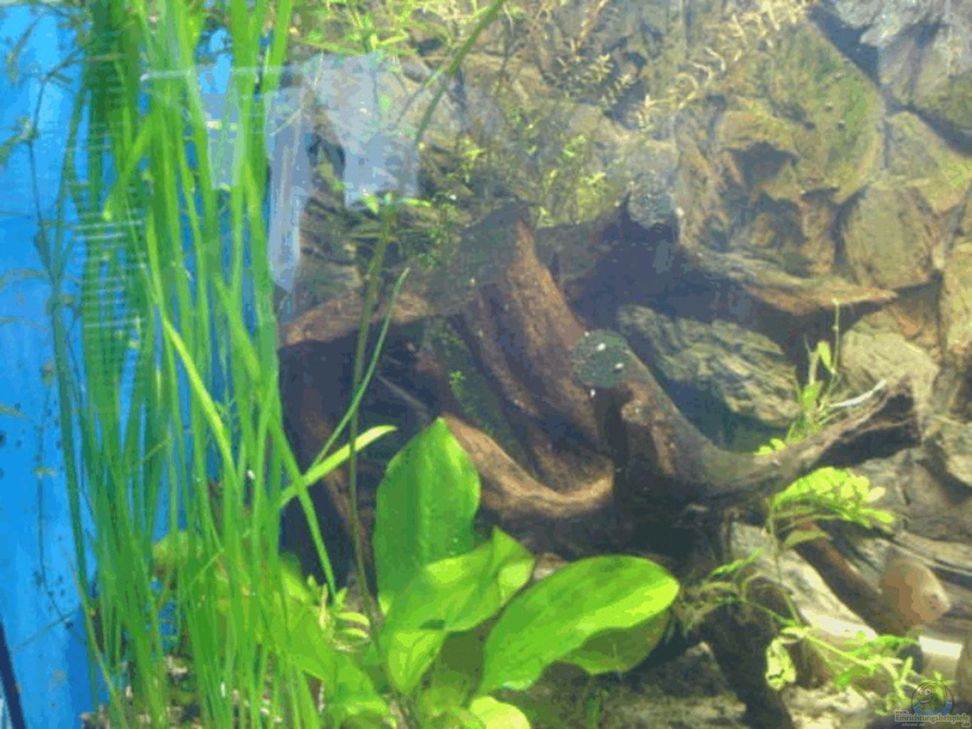 Example no 1222 from the category mixed america tanks for Aquarium wurzel