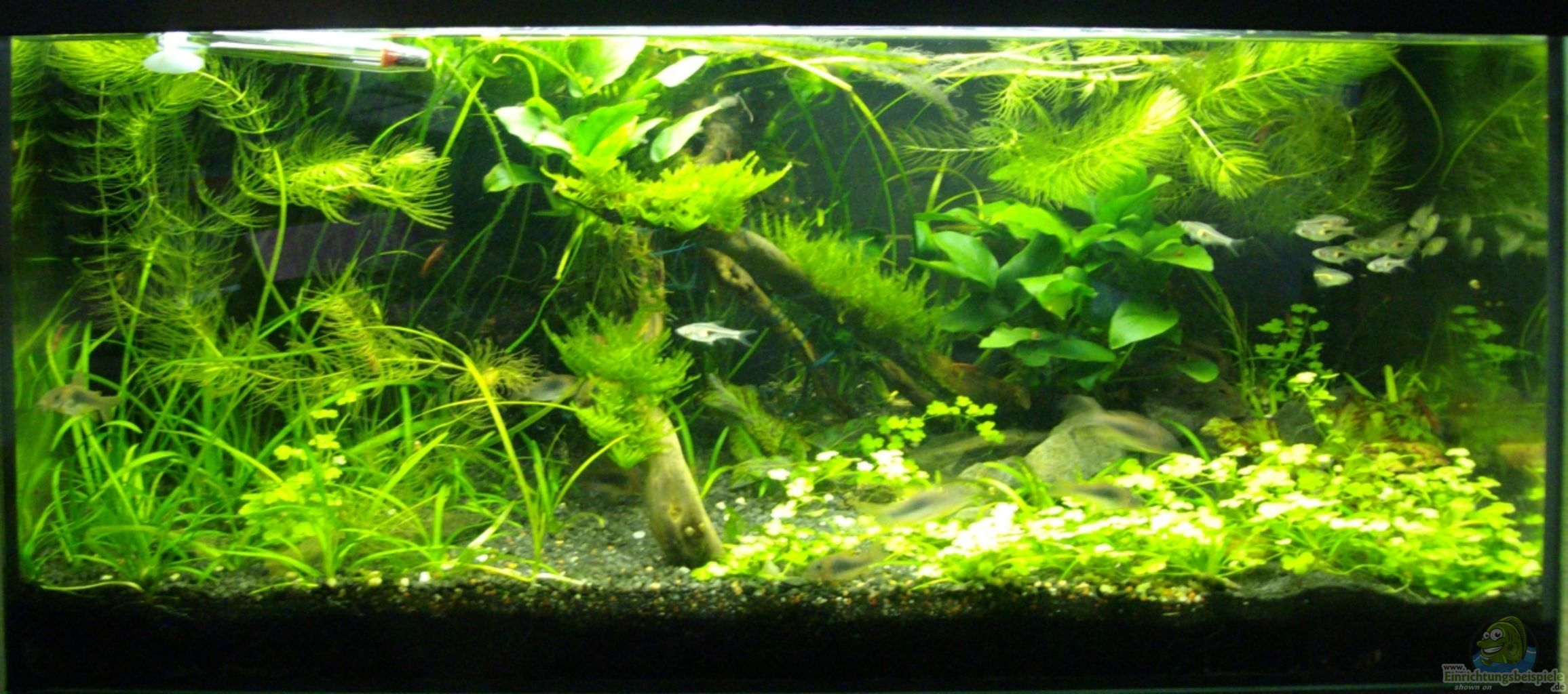 Example no 13611 from the category community tanks for Aquarium corner decoration