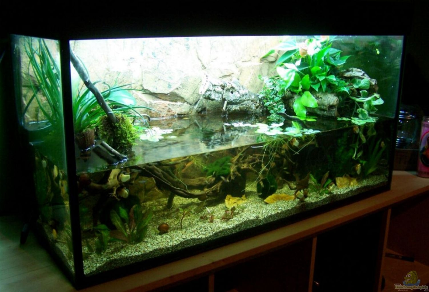 Floating fish tanks filter floating free engine image for Asiatique decoration