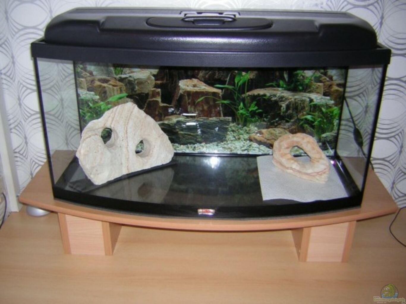 Example no 1892 from the category community tanks for Sera aquarium