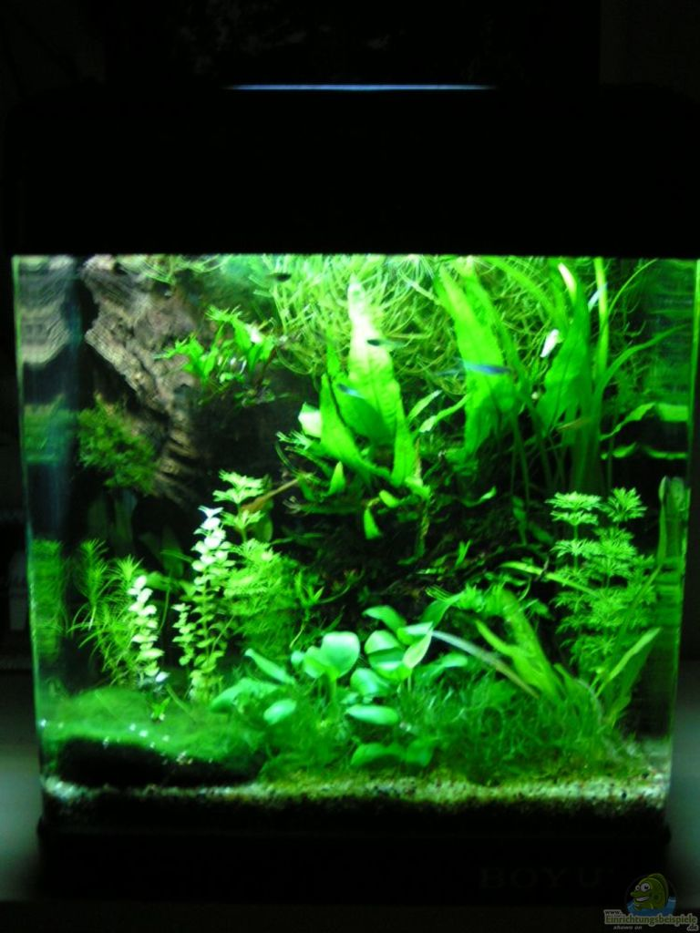 Example no 18928 from the category community tanks for Mein aquarium