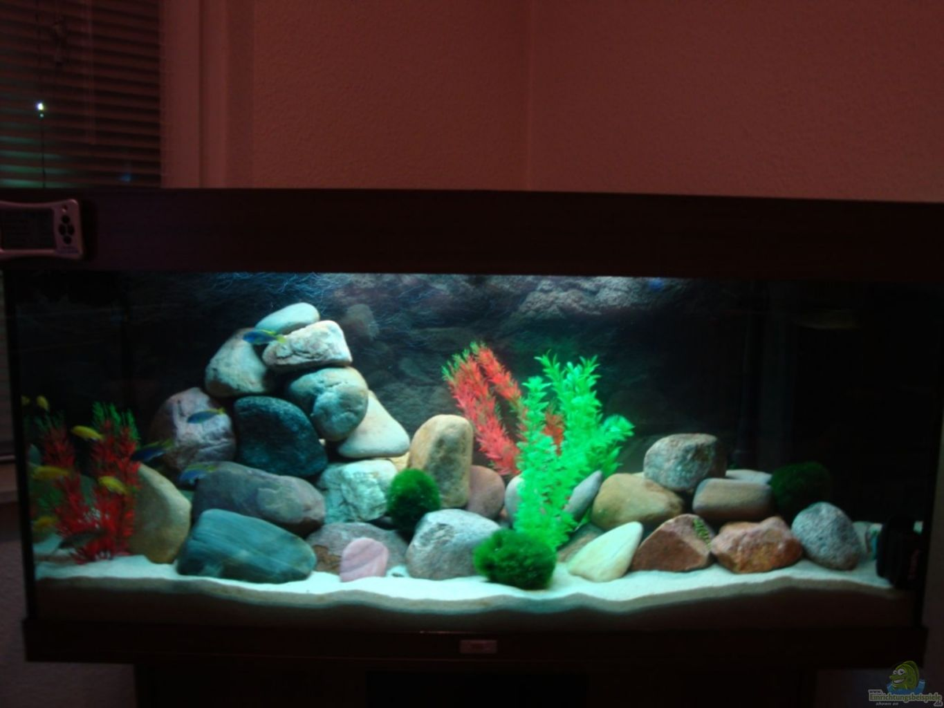 Example no 19057 from the category lake malawi for Decoration aquarium 60 litres