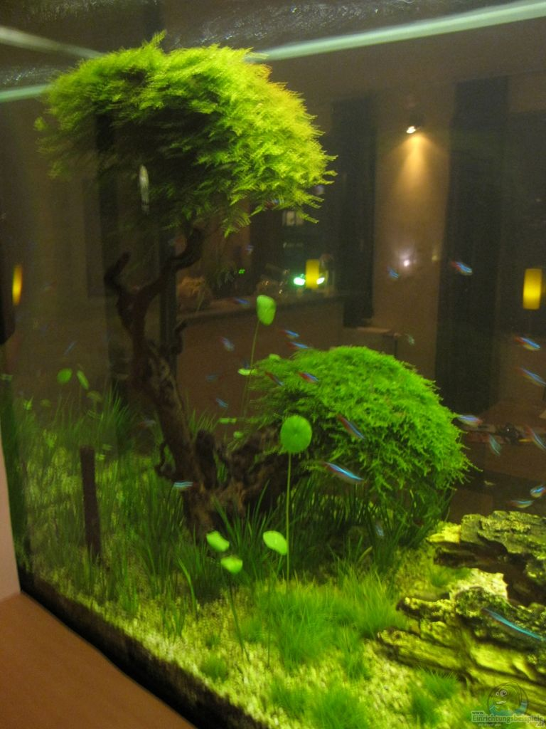 Example no 19744 from the category aquascaping for Aquarium wurzel