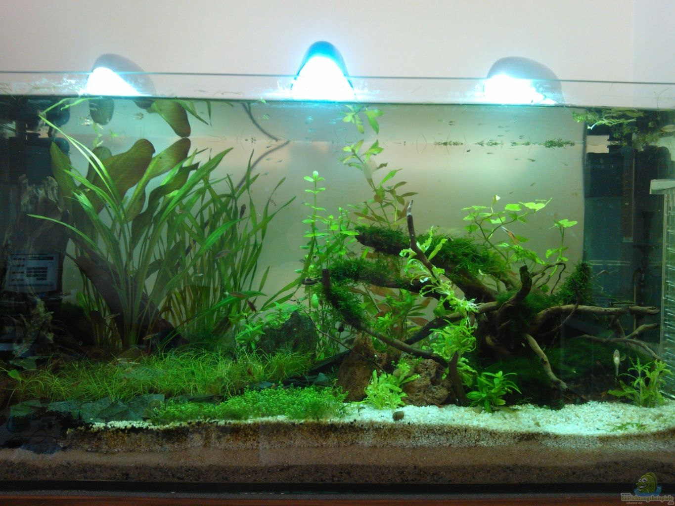 Example no 20217 from the category community tanks for Aquarium corner decoration