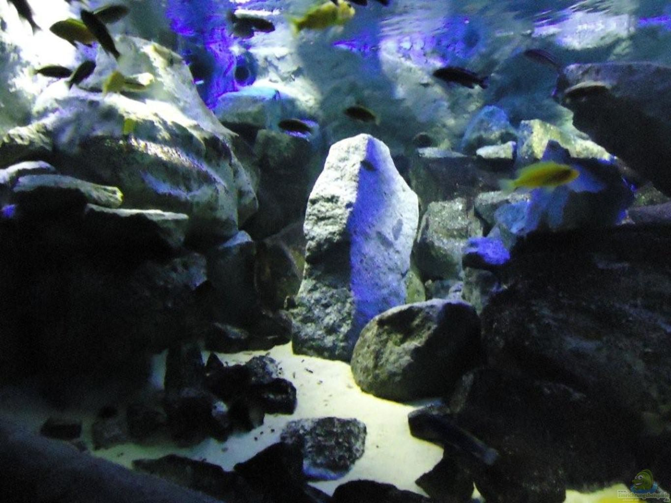 Aquarium supplies boulder cichlid stone large boulder for Fish aquarium stores