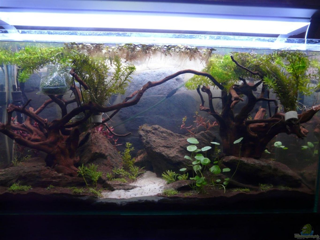 Example no 20578 from the category aquascaping