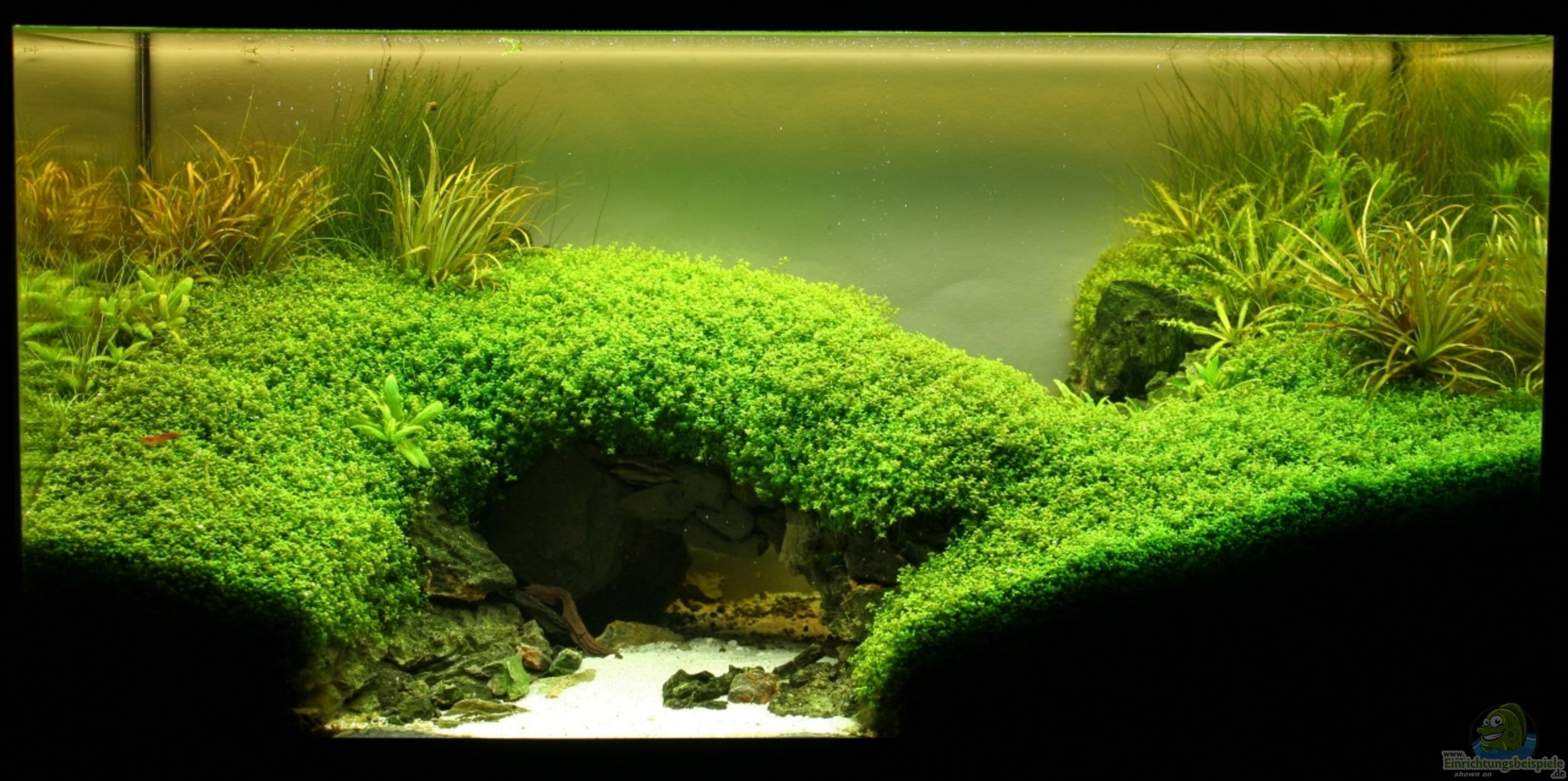 Example No 21553 from the category aquascaping