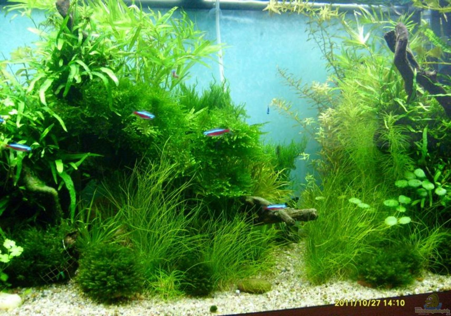 Example no 21692 from the category community tanks for Aquarium wurzel