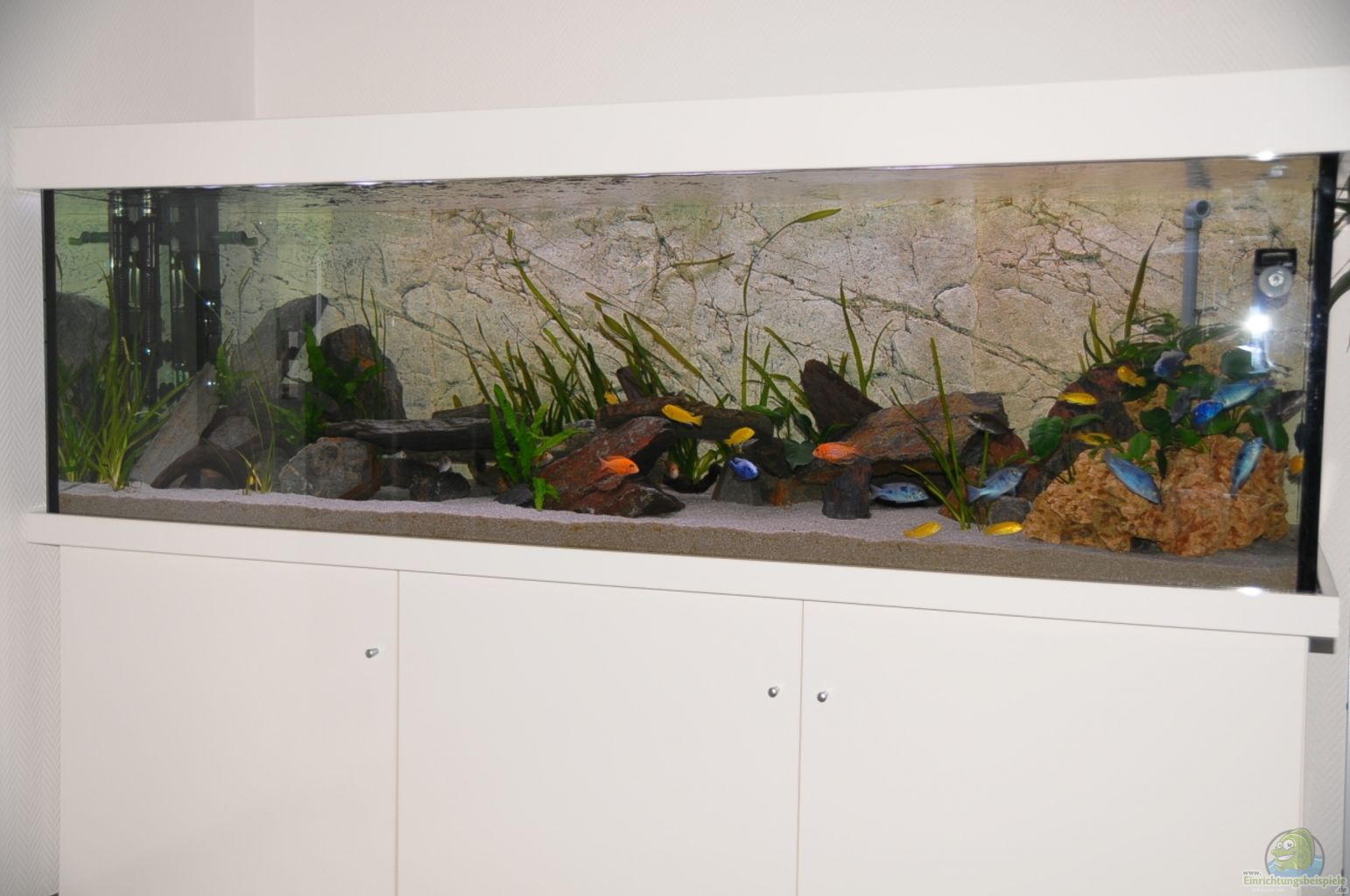 Example no 22553 from the category lake malawi for Decoration aquarium 60 litres