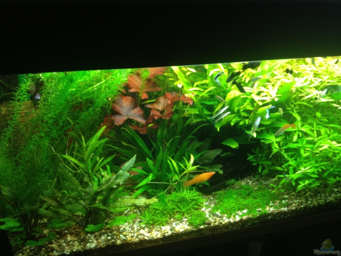 Example no 23057 from the category community tanks for Aquarium 120x40x50