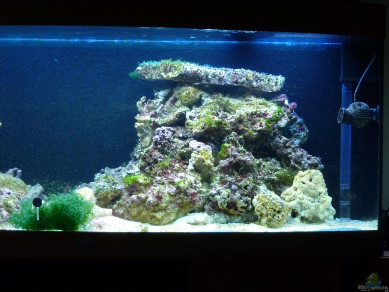 Esempio n 23177 dal categoria acqua salata - Aquarium wohnzimmer ...