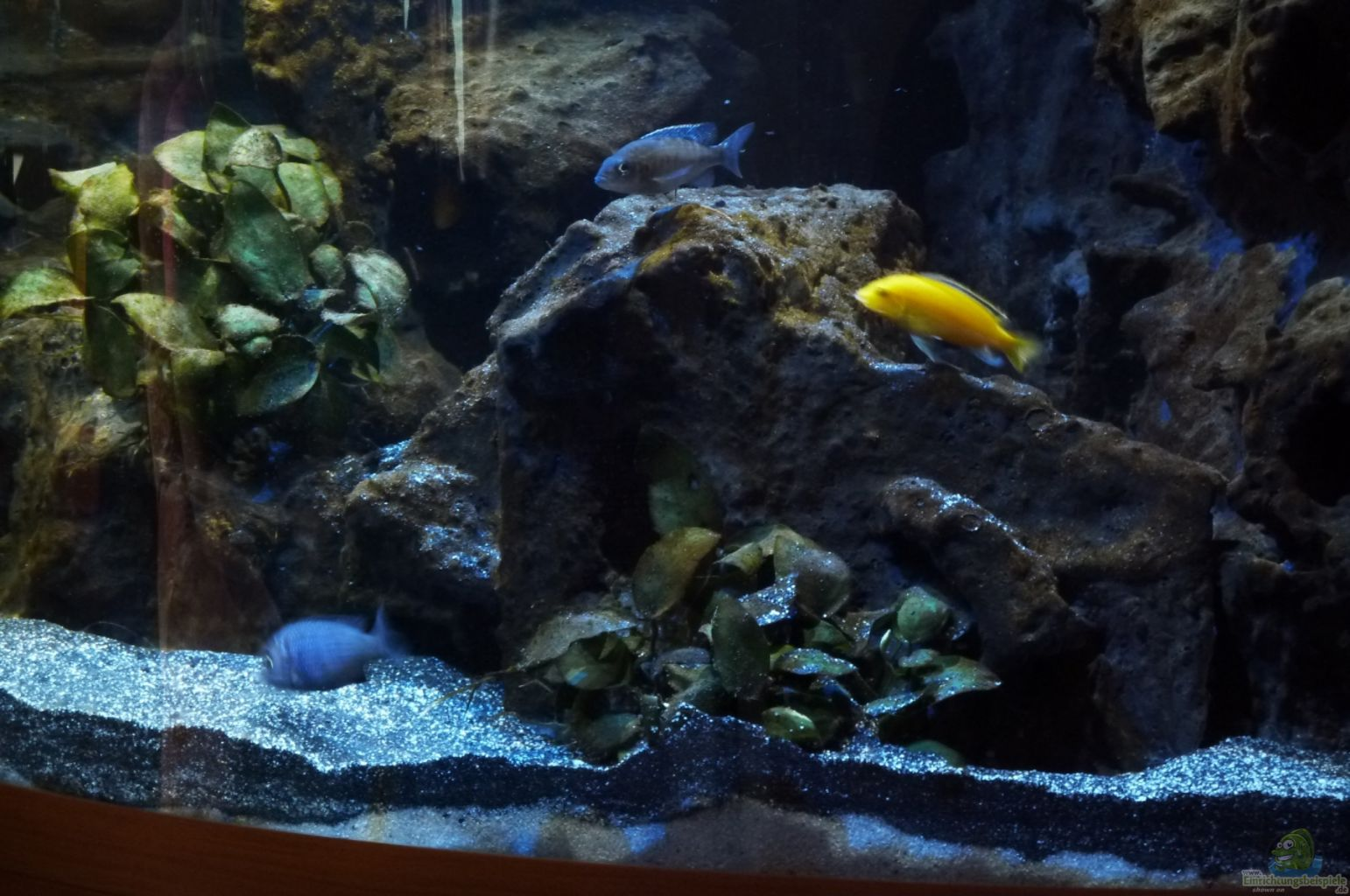 Example no 23248 from the category lake malawi for Aquarium corner decoration