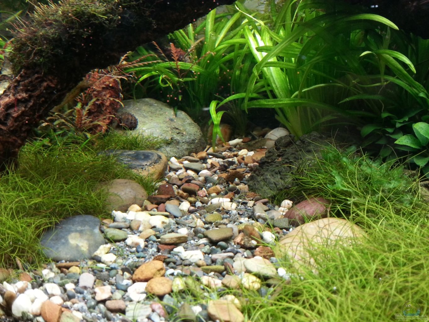 Example No 24945 from the category aquascaping