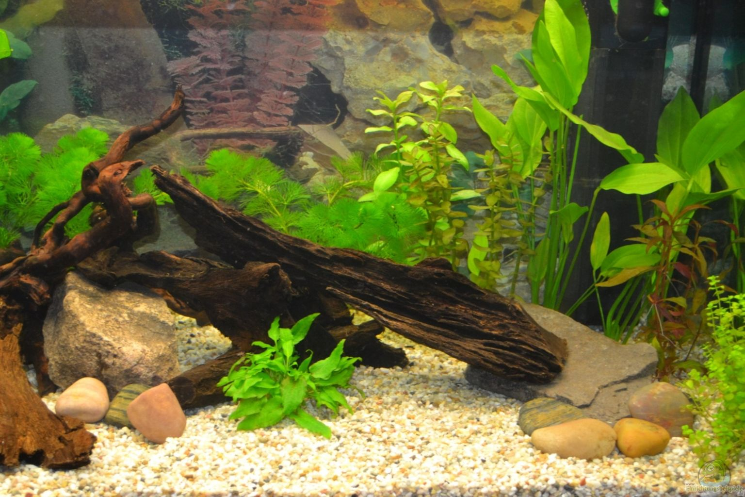 Aquariumtisch Hornbach ~ Example No 25524 from the category community tanks
