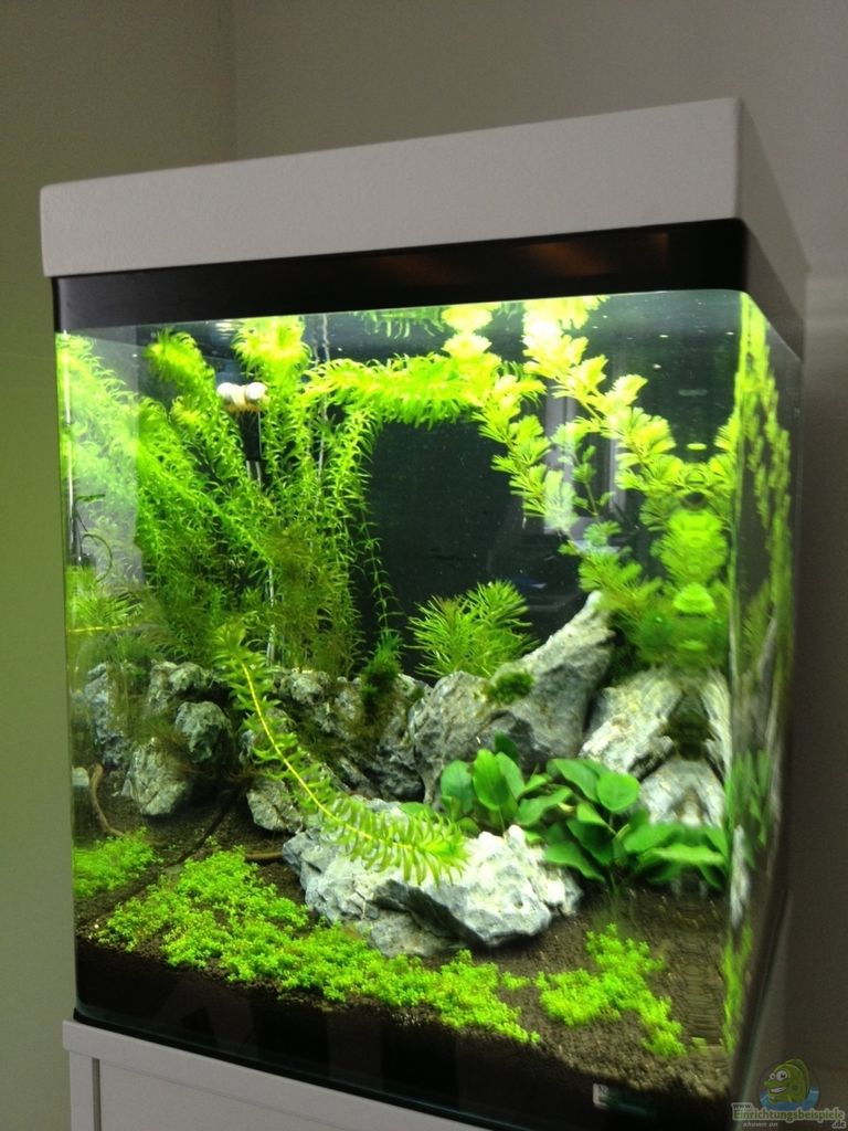 aquarium 60l. Black Bedroom Furniture Sets. Home Design Ideas