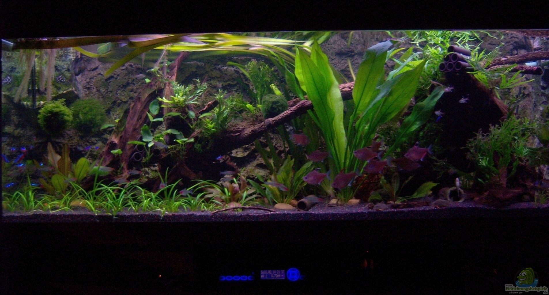 Example no 26107 from the category south america for Aquarium corner decoration