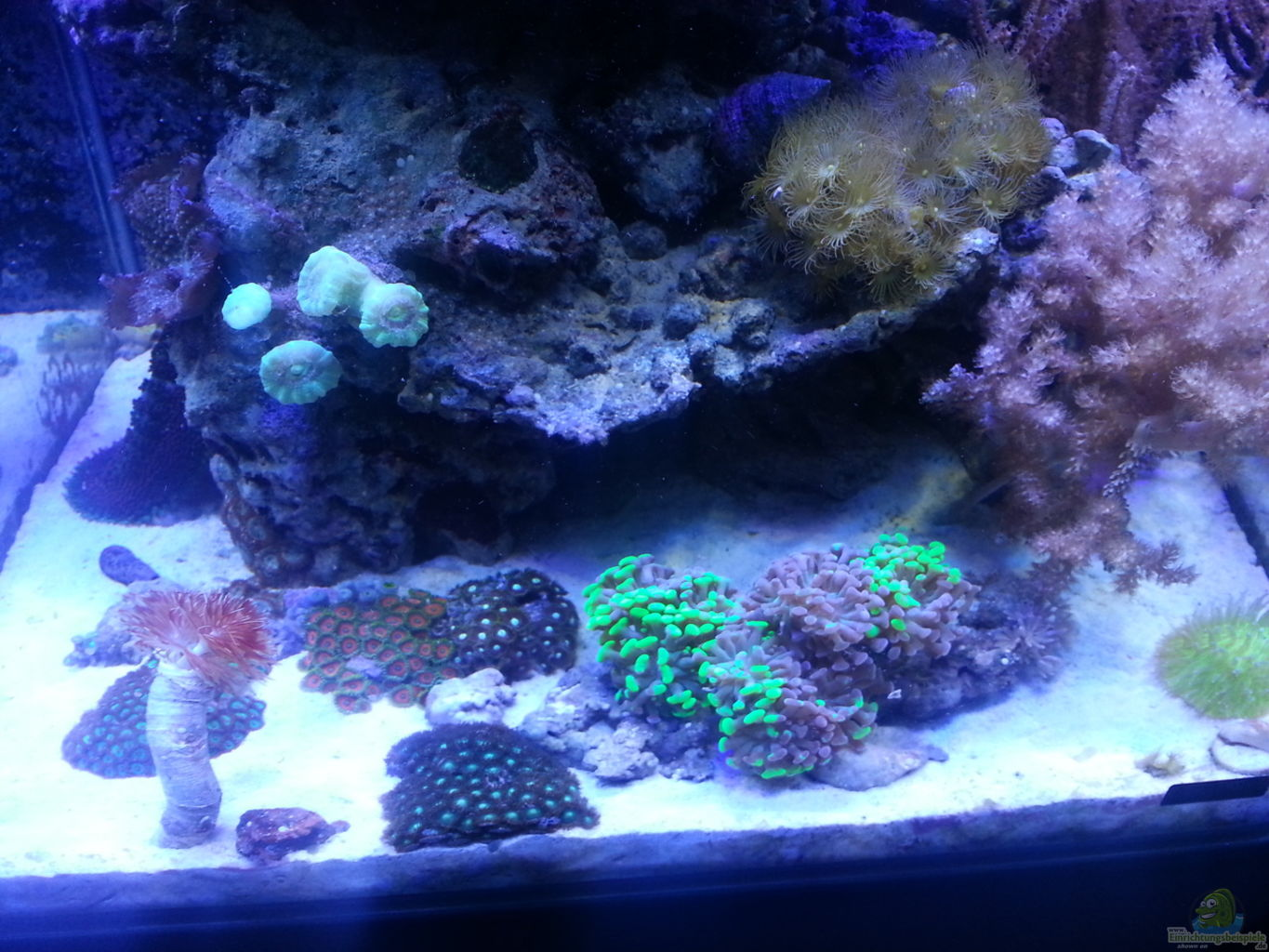 Example no 26253 from the category salt water for Decoration aquarium 60 litres