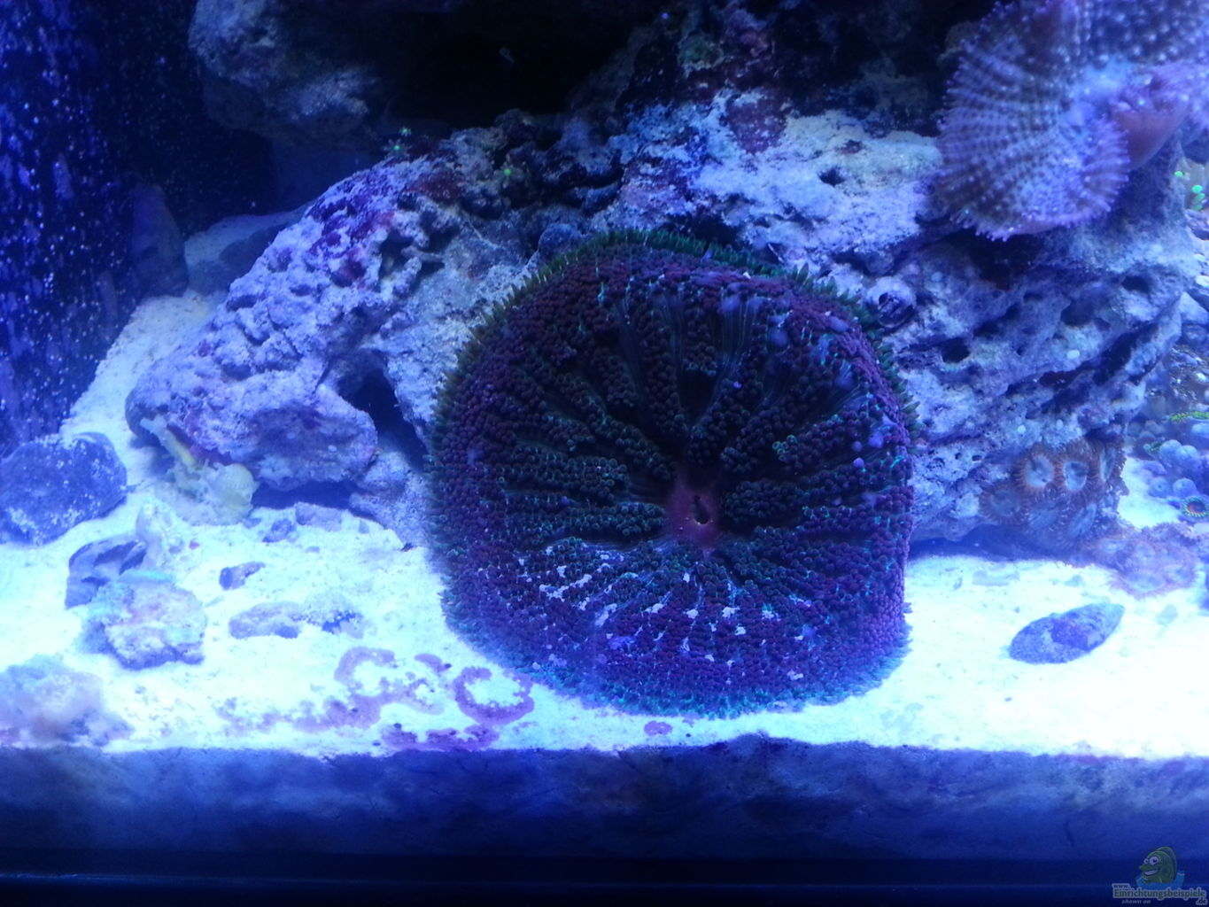 Example no 26253 from the category salt water Decoration aquarium 60 litres