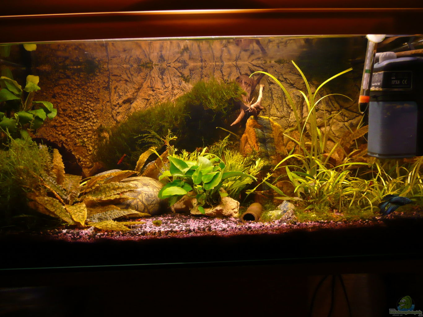 Example no 27583 from the category community tanks for Decoration aquarium 60 litres
