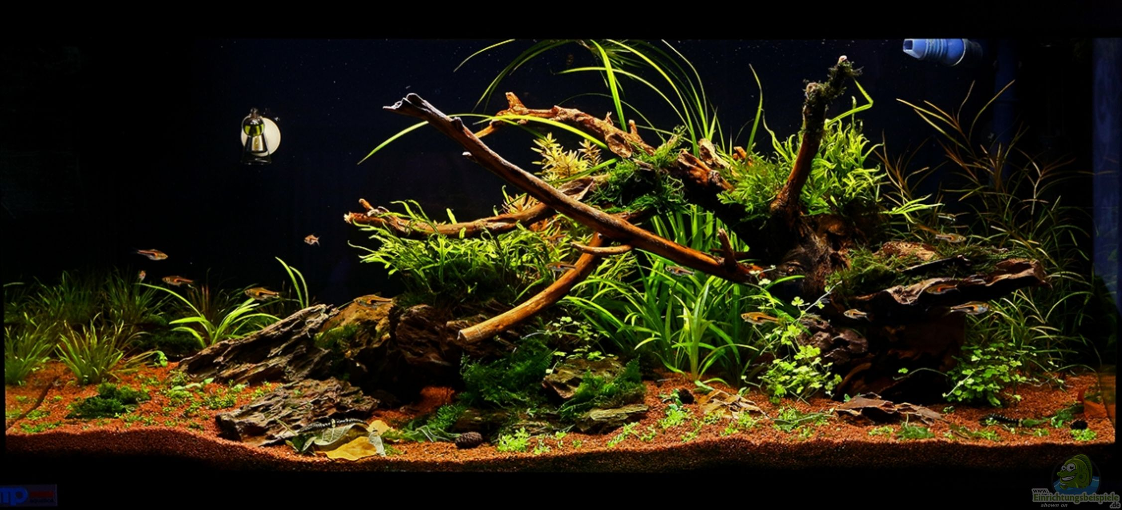 Example no 28304 from the category community tanks for Aquarium wurzel
