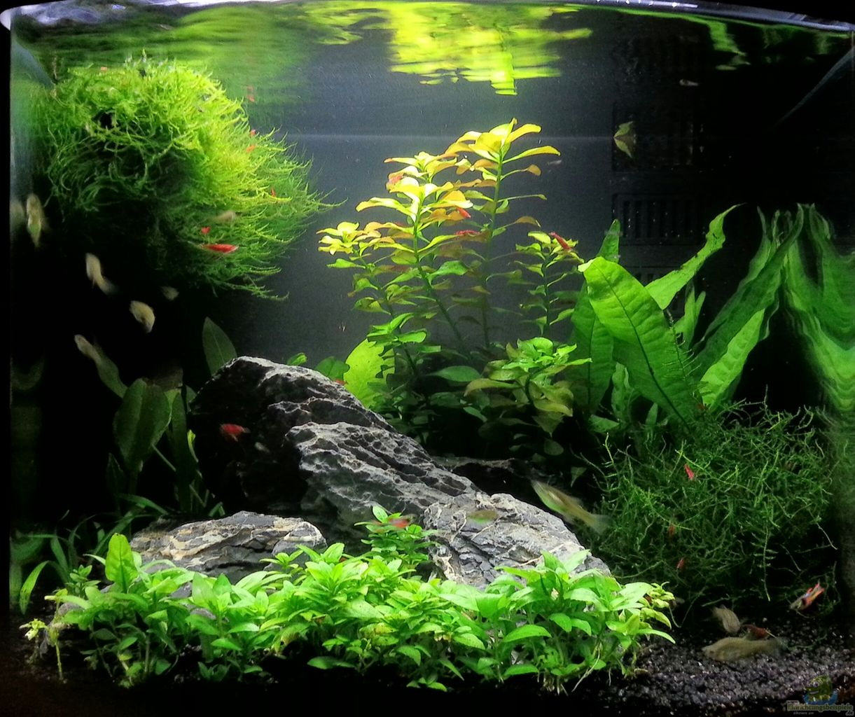 Example no 29141 from the category community tanks for Sera aquarium
