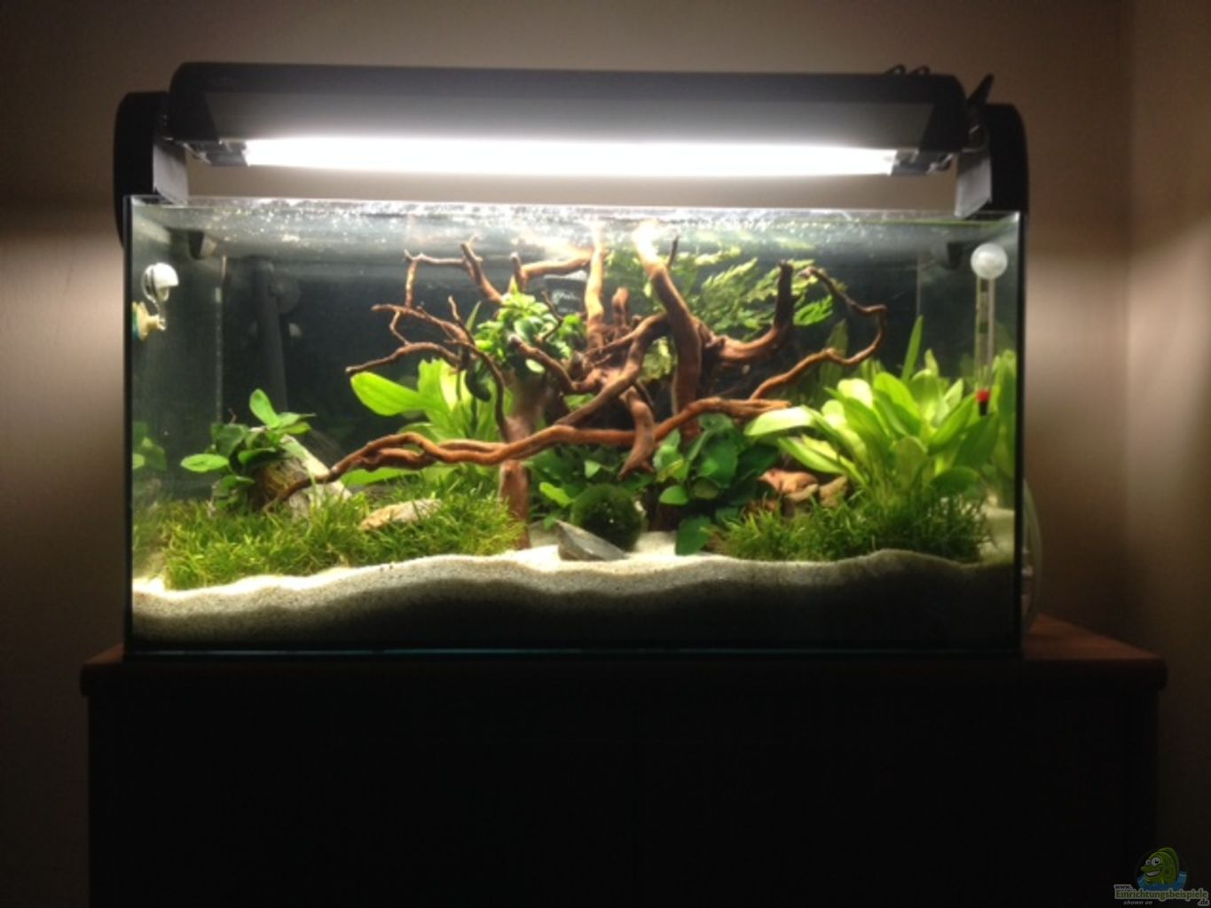 example no 30224 from the category aquascaping