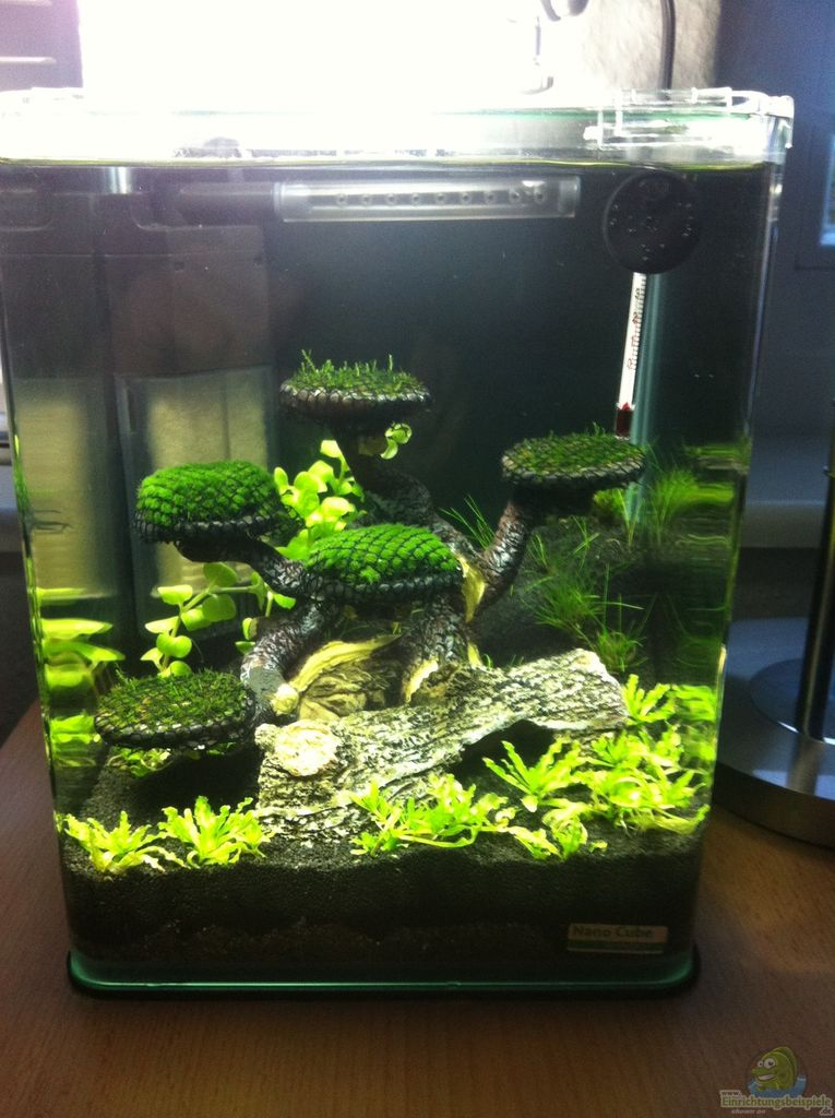 Example no 30612 from the category invertebrates for Aquarium corner decoration