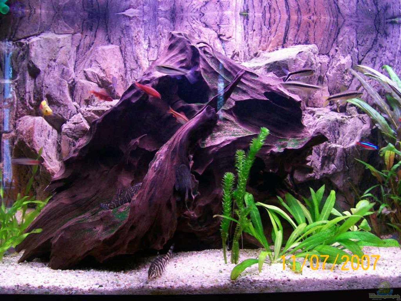Example no 30887 from the category community tanks for Aquarium wurzel