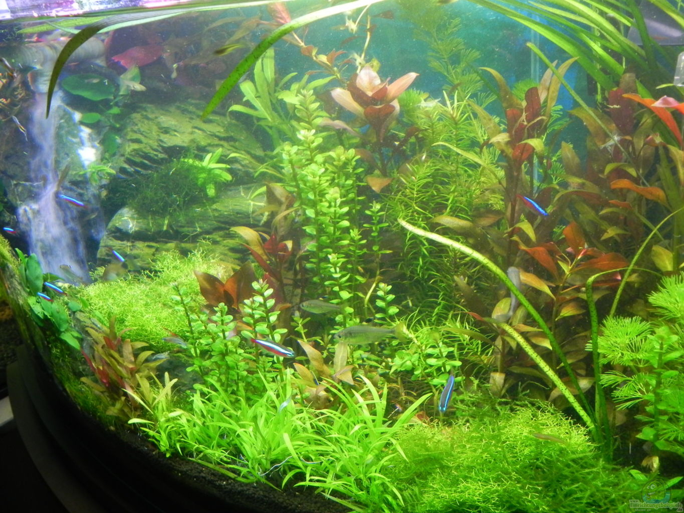 Example no 30905 from the category mixed east africa tanks for Aquarium waterfall decoration