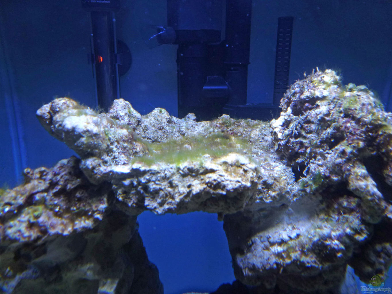 Example no 30987 from the category salt water for Algen im aquarium