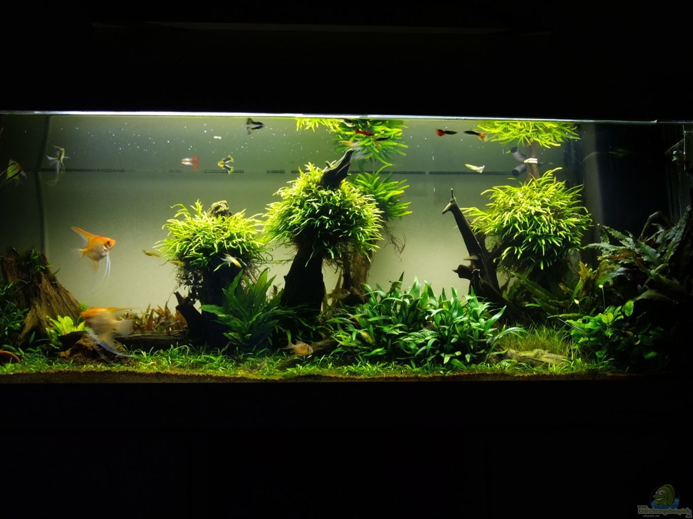 Fish Tank Scaping : Example No 31655 from the category mixed america tanks