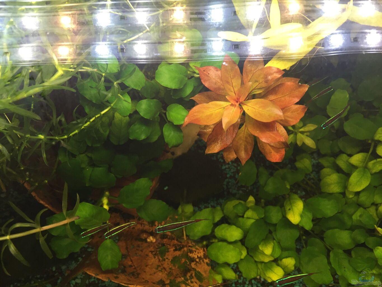 Decoration Aquarium Sans Bulles