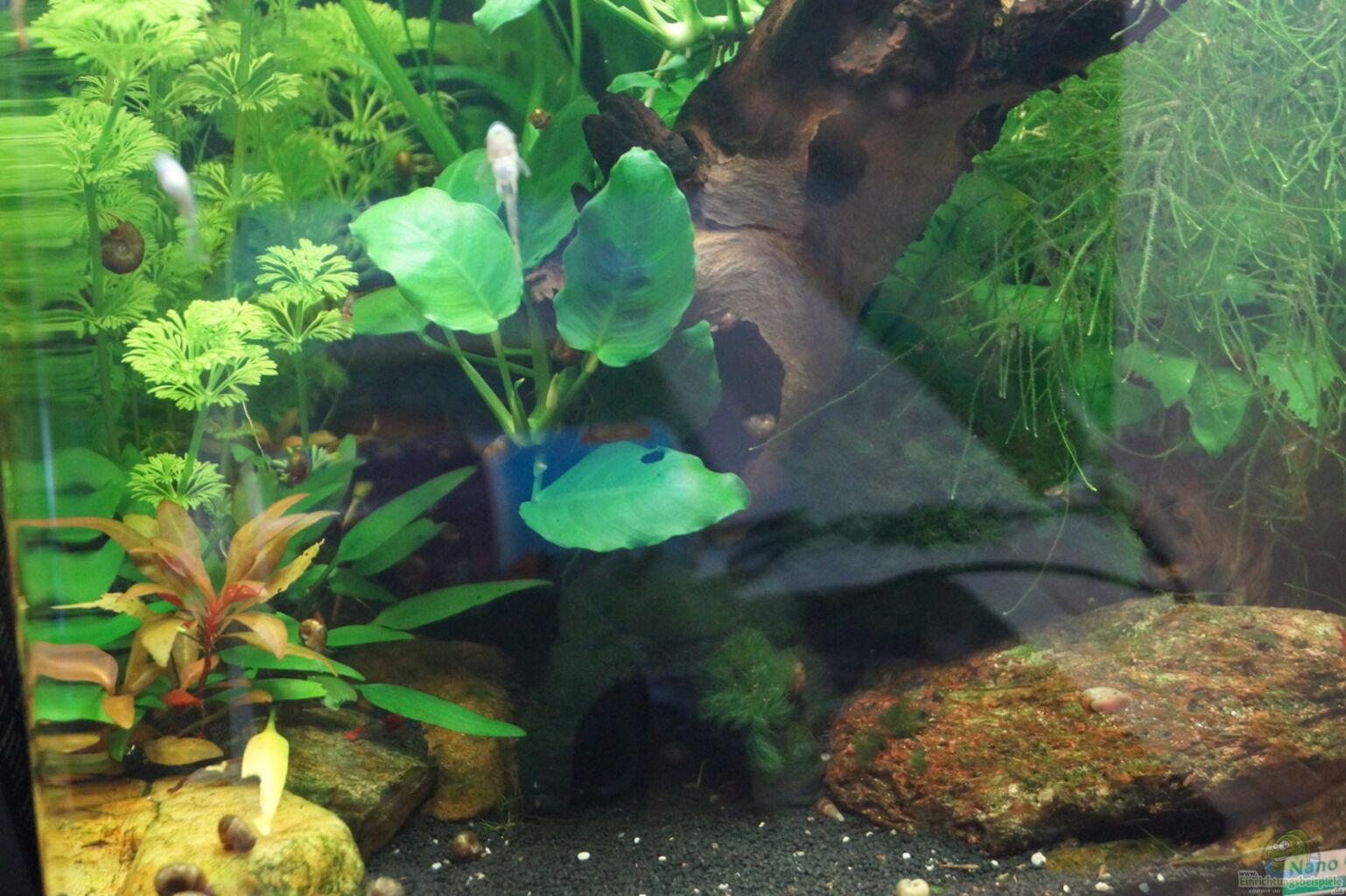 Example no 32188 from the category invertebrates for Aquarium cuve