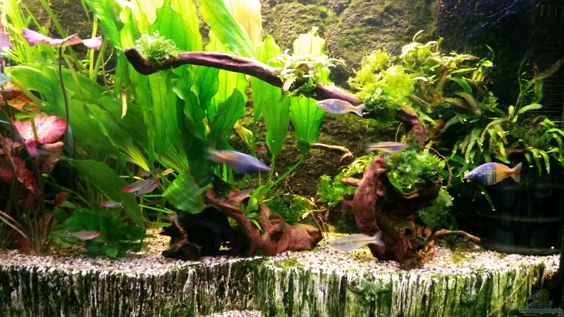 Example no 32278 from the category community tanks for Aquarium 10 litres