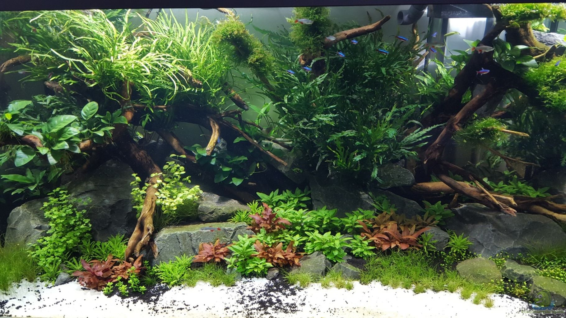 ... chosen for the Tropica Aquarium Soil and Tropica Aquarium Soil Powder