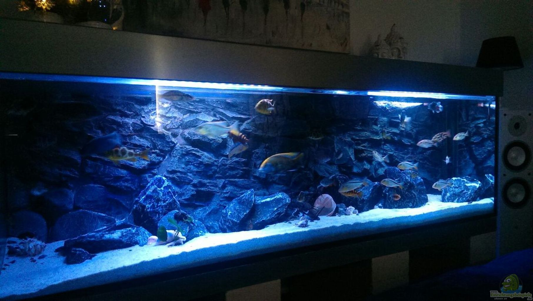 Aquarium inclusive metal cover. Soon a larger aquarium is planned with ...