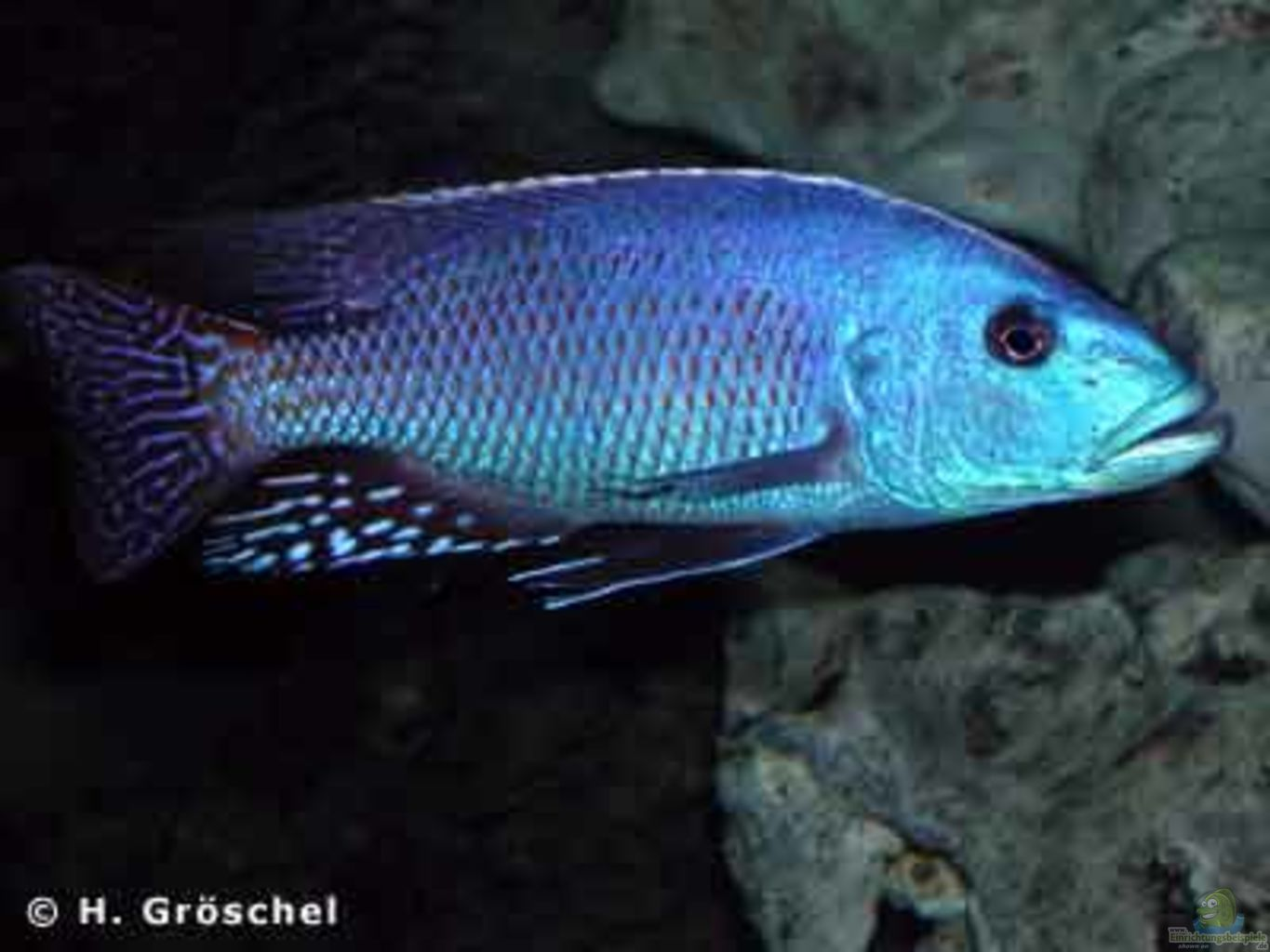 Example No 327 From The Category Lake Malawi