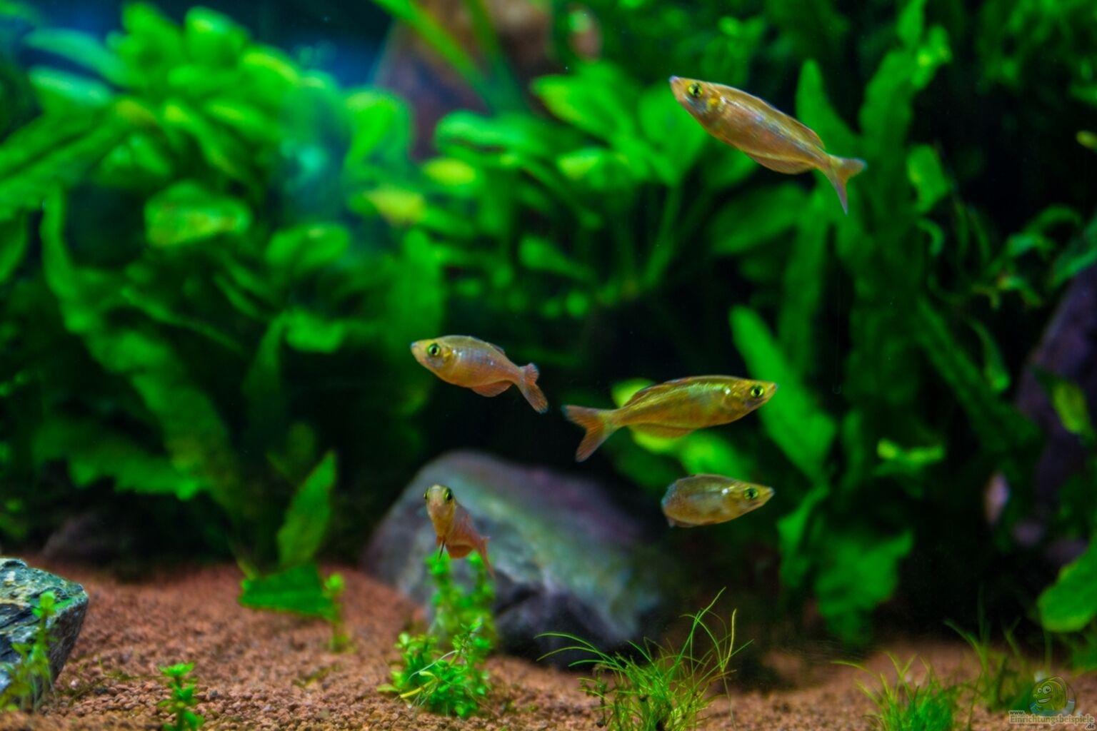 Exemple nombre 32706 de cat gorie communautaire for Aquarium 120x40x50
