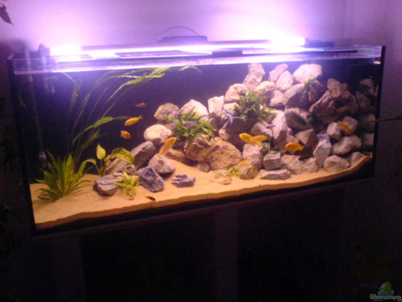 Example no 3979 from the category lake malawi for Decoration aquarium 60 litres