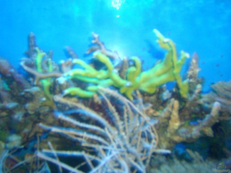 Exemple nombre 5130 de cat gorie l 39 eau de mer for Algues rouges piscine