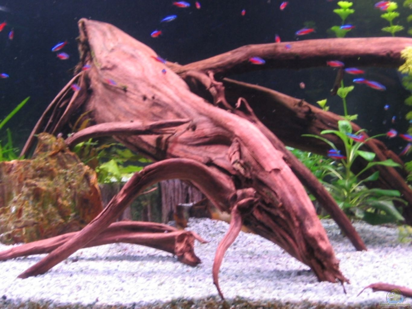 Example no 6900 from the category mixed america tanks for Aquarium wurzel