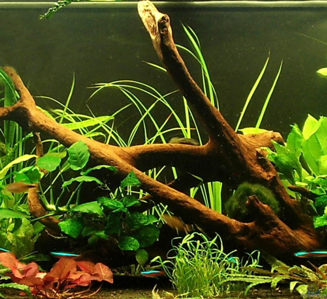 Example no 8053 from the category community tanks for Aquarium wurzel